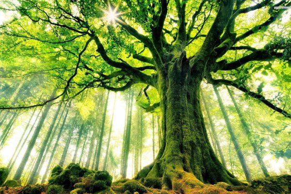 nature_big_tree