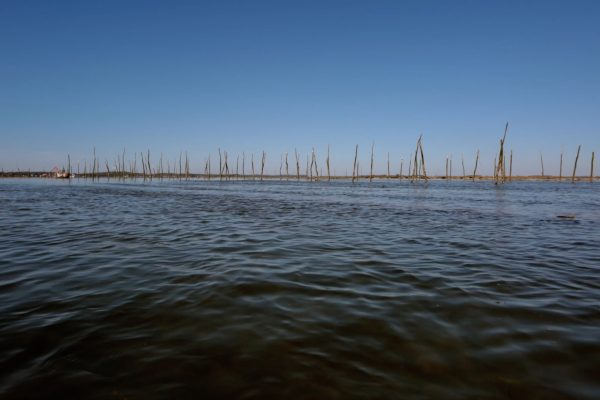 Parc Huitres Bassin d'Arcachon
